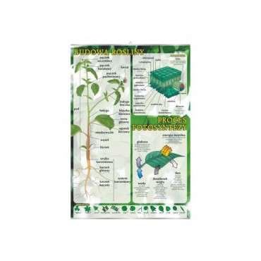 Plansza dydaktyczna - budowa rośliny i proces fotosyntezy
