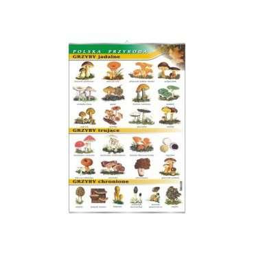 Plansza grzyby jadalne i trujące