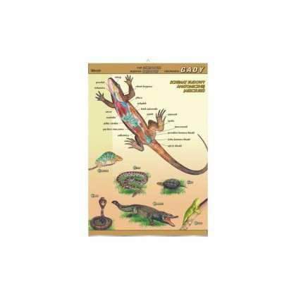 Plansza dydaktyczna - gady - budowa anatomiczna