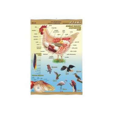 Plansza ptaki - budowa anatomiczna