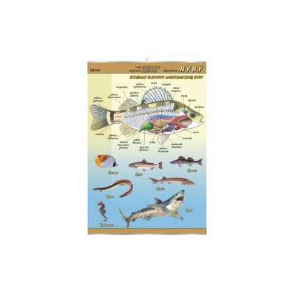 Plansza ryby - budowa anatomiczna
